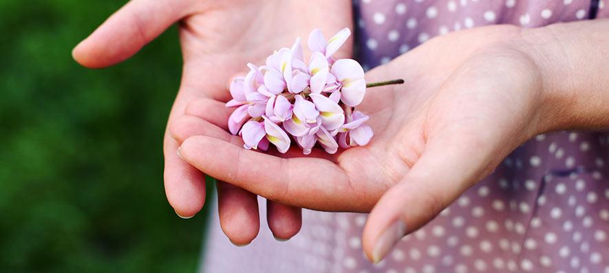 Akacja - kwiat